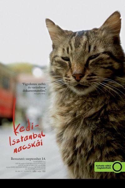 Kedi - Isztambul macskái – Plakát